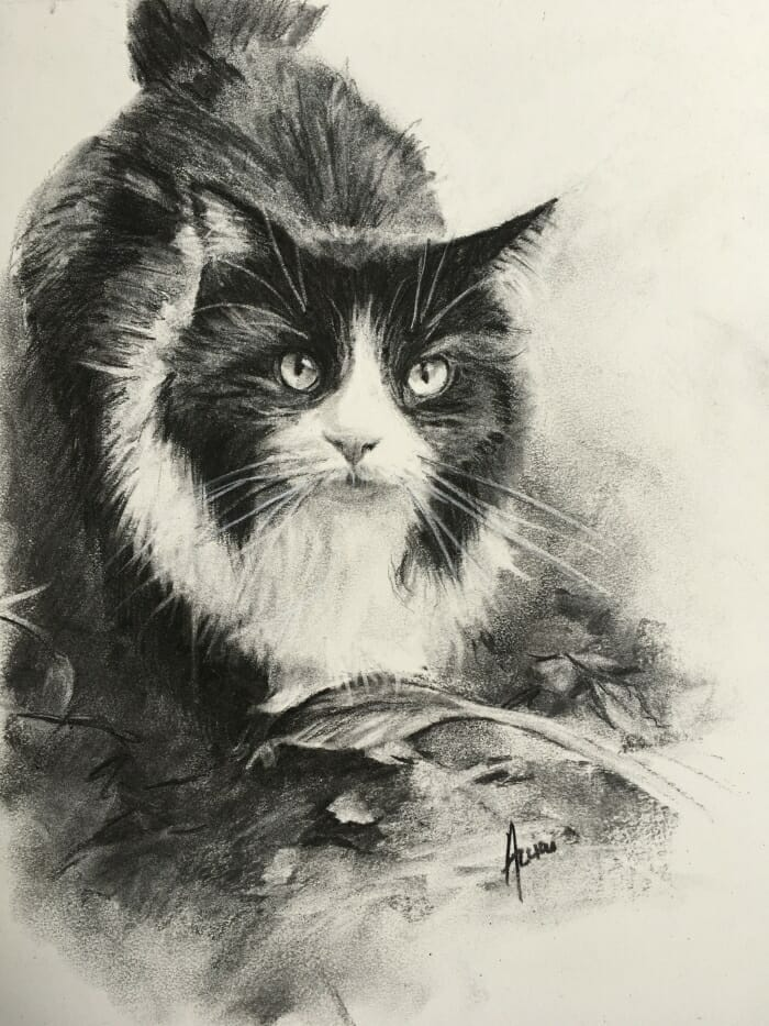 Biscuit the cat-charcoal-Lisa Acciai