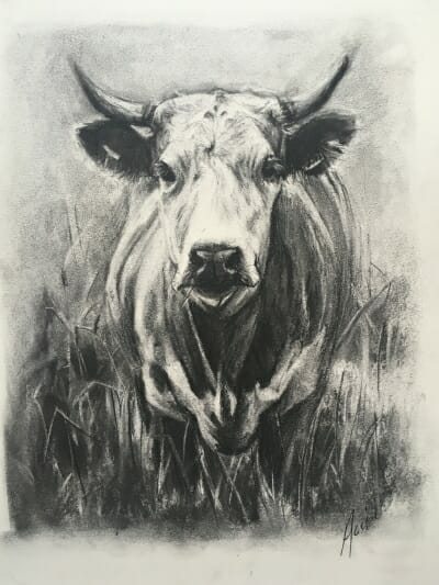 Don't mess with me -bull - charcoal - Lisa Acciai