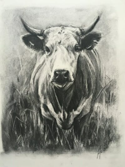 Don't mess with me -bull - charcoal - Lisa Acciai