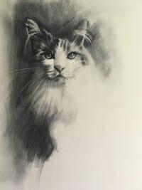 Cat study - charcoal Lisa Acciai