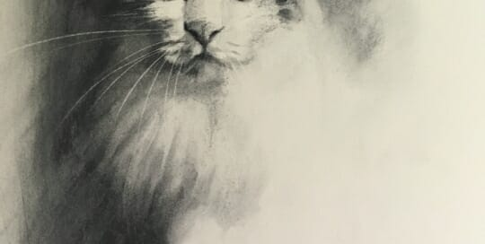 Cat study - charcoal Lisa Acciai