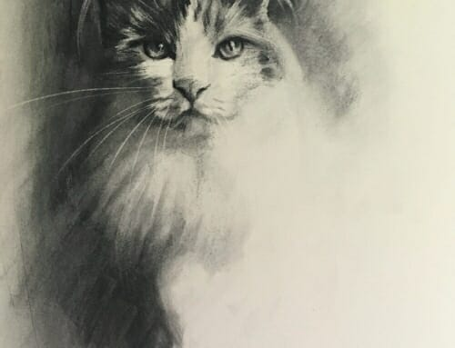 Cat Study in Charcoal