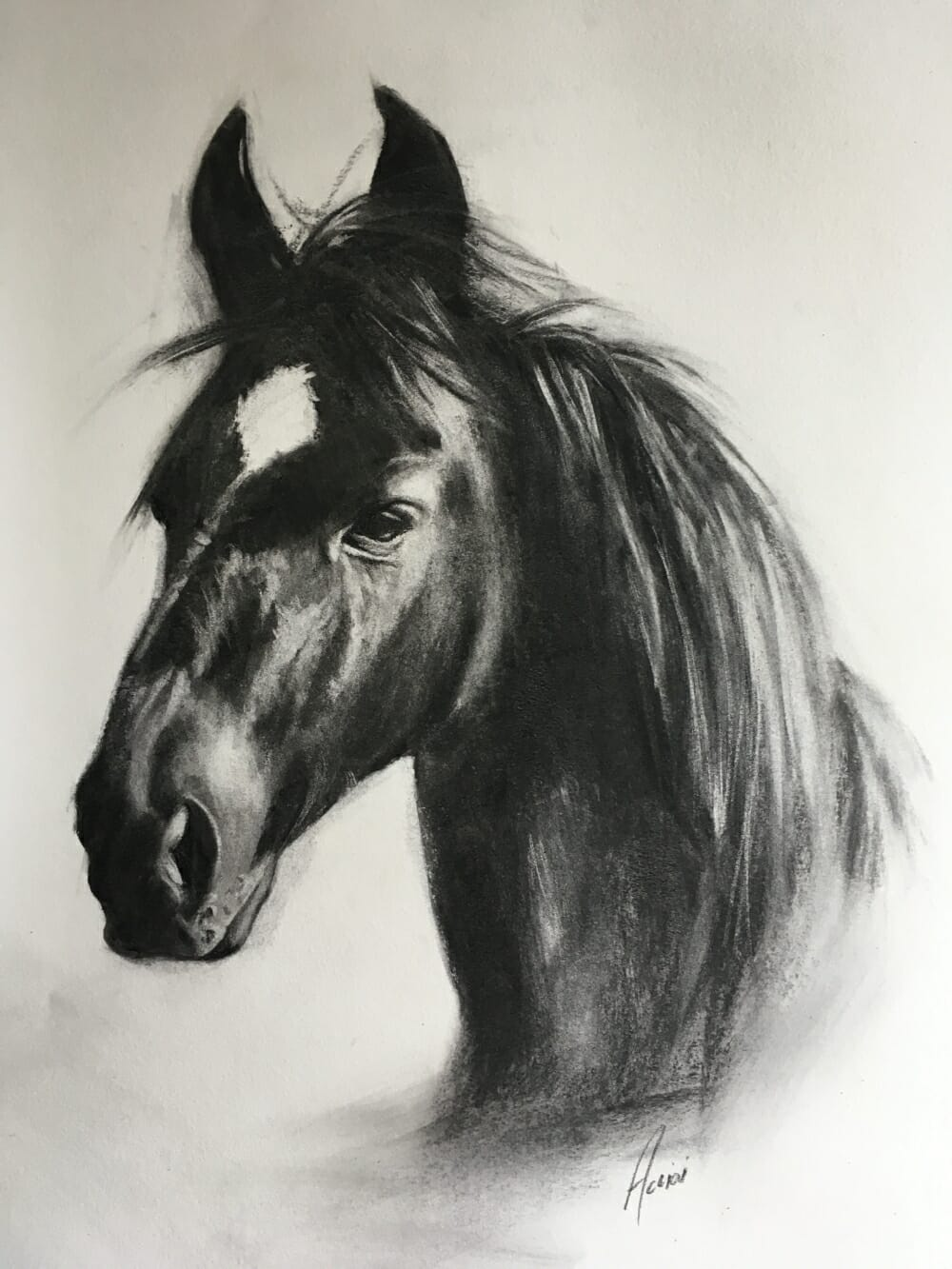 Horse-charcoal-Lisa-Acciai