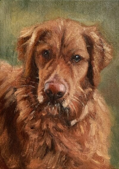 Argo-Golden Retriever-oil painting-Lisa-Acciai