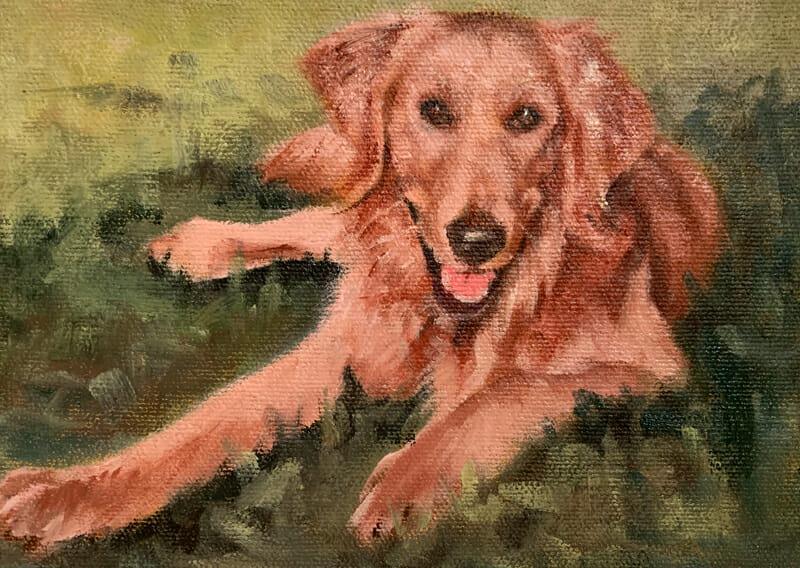 Katie-Golden Retriever-oil painting-Lisa-Acciai