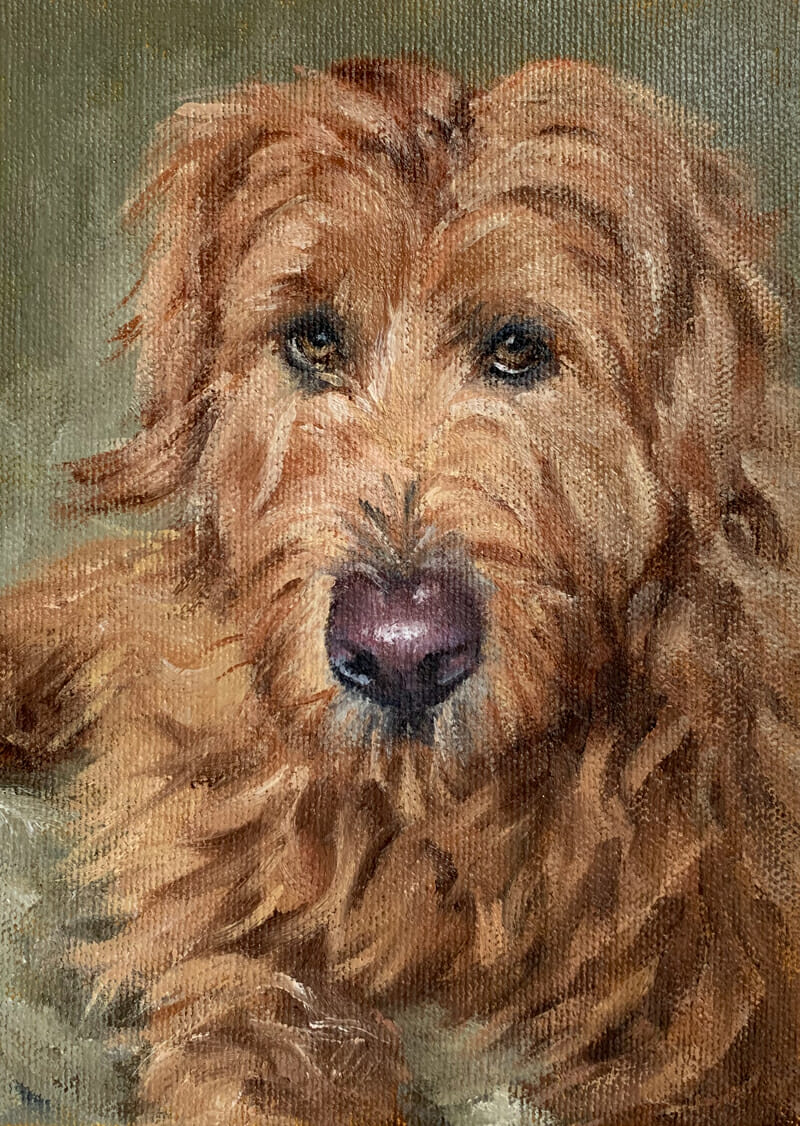 Sophie-oGoldendoodle-oil painting-Lisa-Acciai