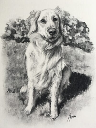 Susie-golden- charcoal-Lisa Acciai