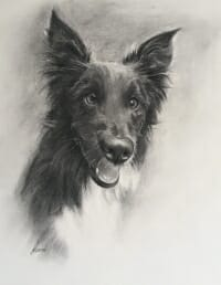 Toby Border Collie in charcoal by Lisa Acciai