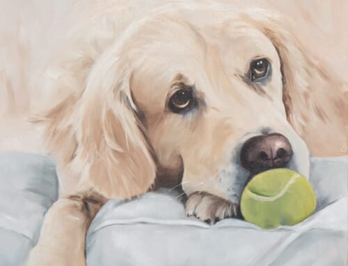 Come Play with Me – Golden Retriever