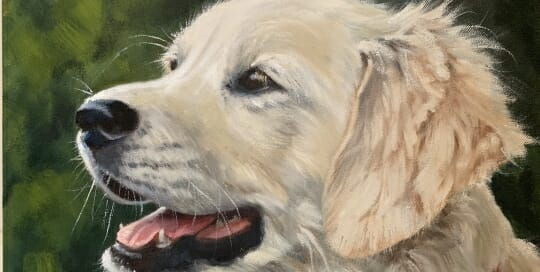 Golden Retriever -oil- Lisa Acciai