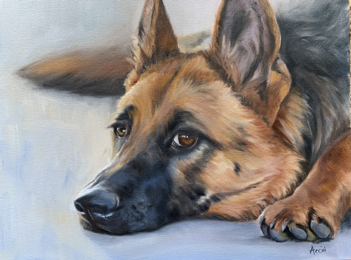 German Shepherd - oil- Lisa Acciai