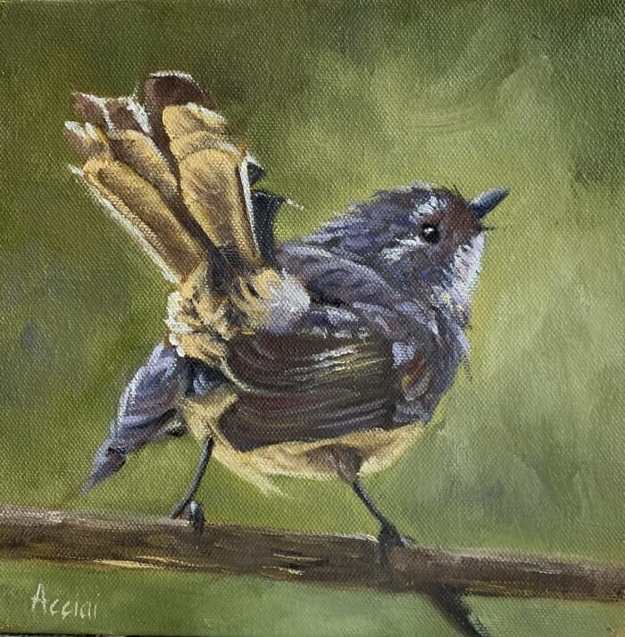 Shake your tail feather-grey fantail-Lisa Acciai