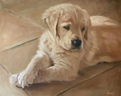 Golden Retriever Puppy - oil - Lisa Acciai