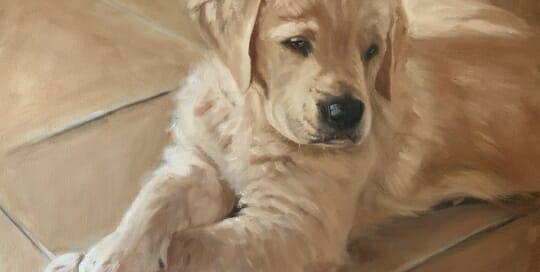 Golden Retriever Puppy - oil - Lisa Acciai