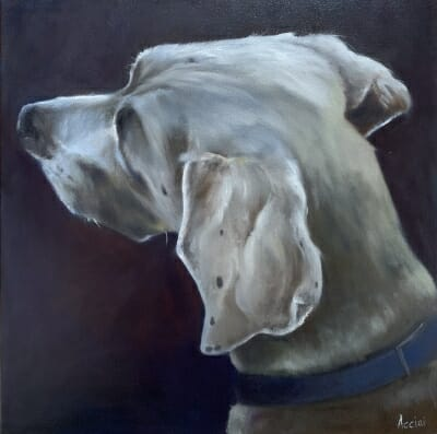 Weimaraner oil painting - Lisa Acciai L.AcStudio