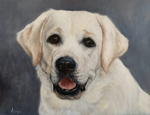Annabelle Lee – Labrador Retriever