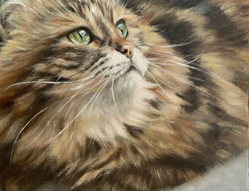 Pia – Siberian Forest Cat