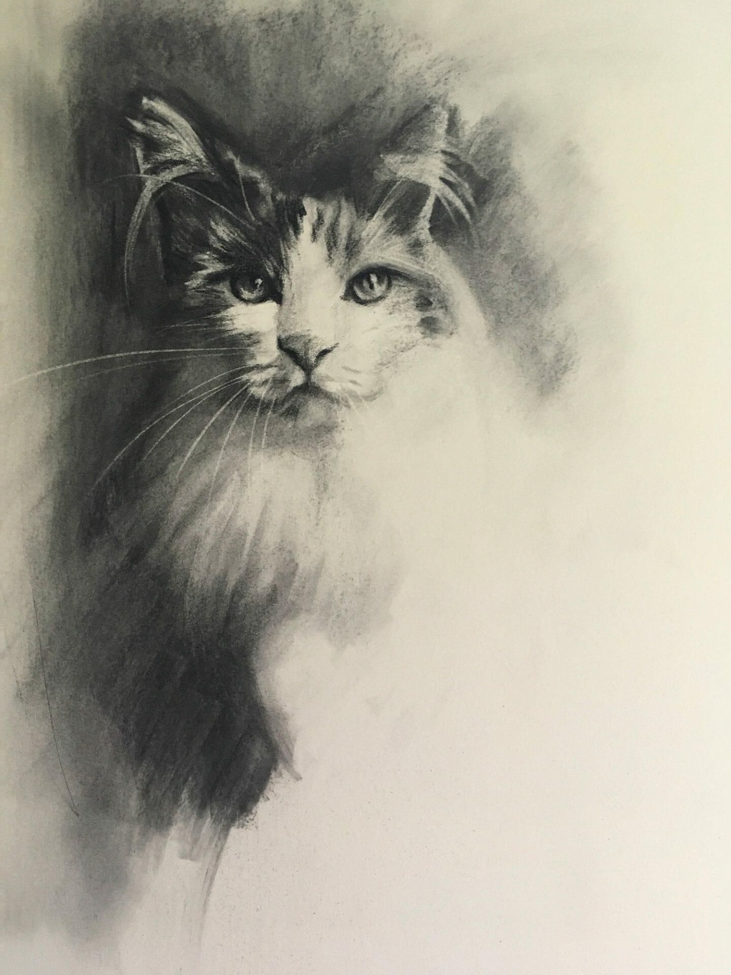 Cat study charcoal by Lisa Acciai