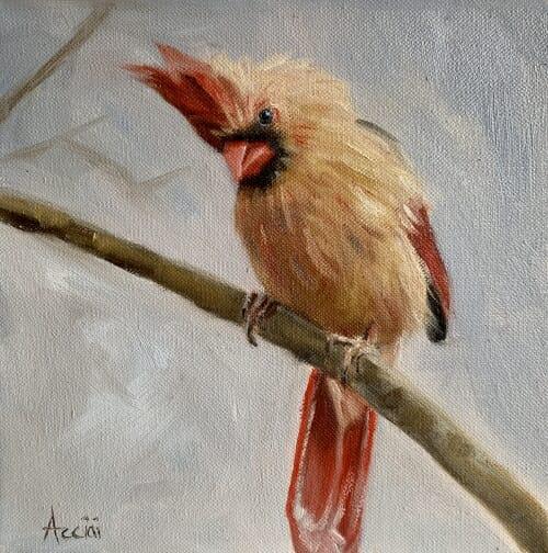 Female Cardinal oil Acciai