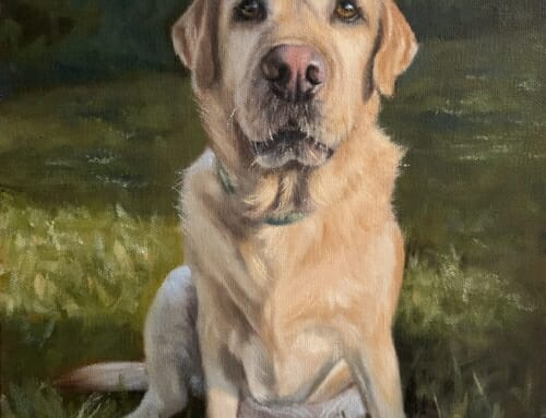 Turk – yellow labrador