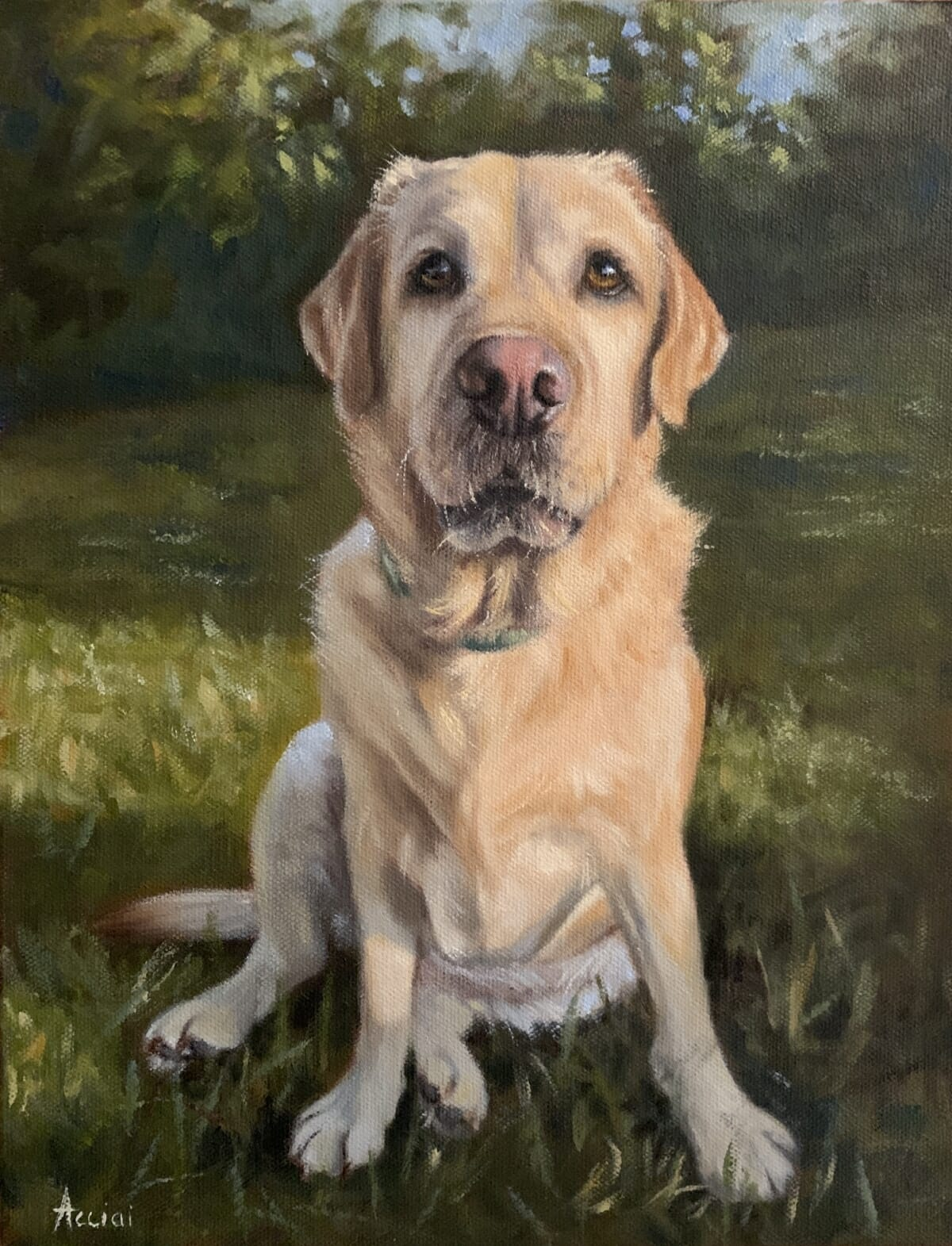 Turk Labrador, oil, Acciai