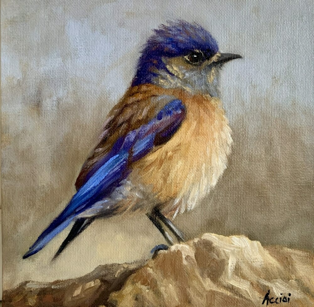 Blue Bird, oil, 8x8, L Acciai