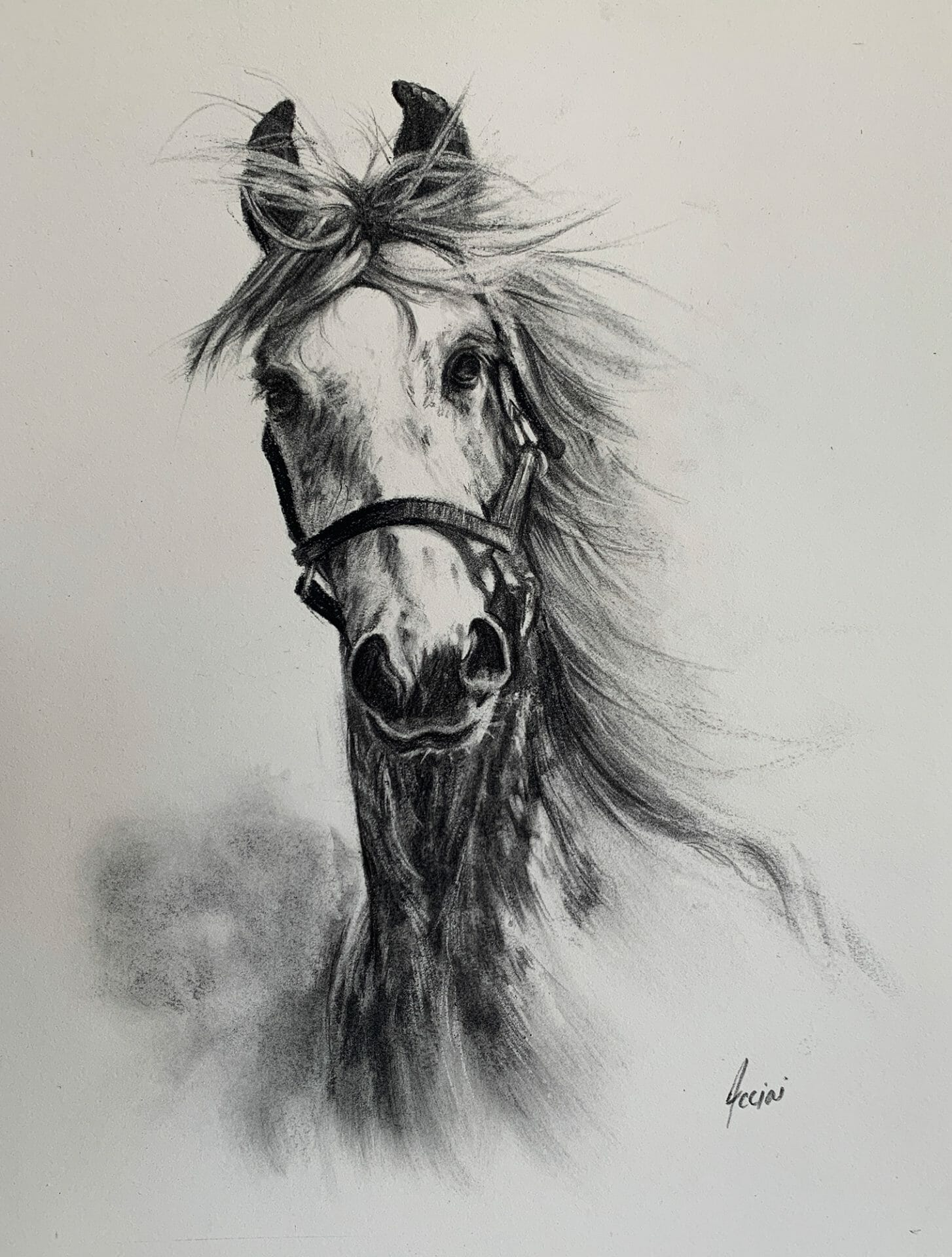 Tennessee Walker Horse - charcoal drawing - Lisa Acciai