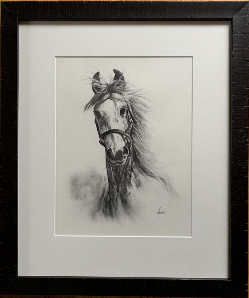 Framed and Matted Charcoal Horse drawing - Acciai