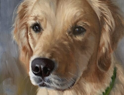 Dixie – golden retriever