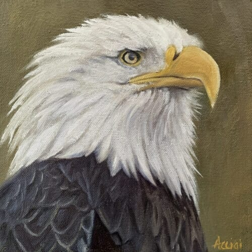 Bald Eagle - 8x8-oil- Lisa Acciai