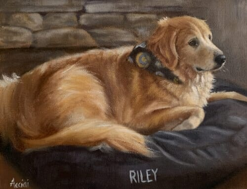 Riley – golden retriever