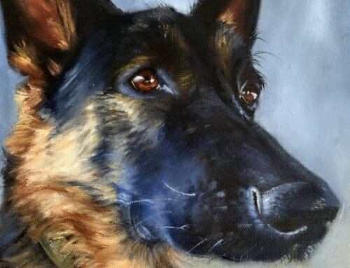 Shadow – german shepherd