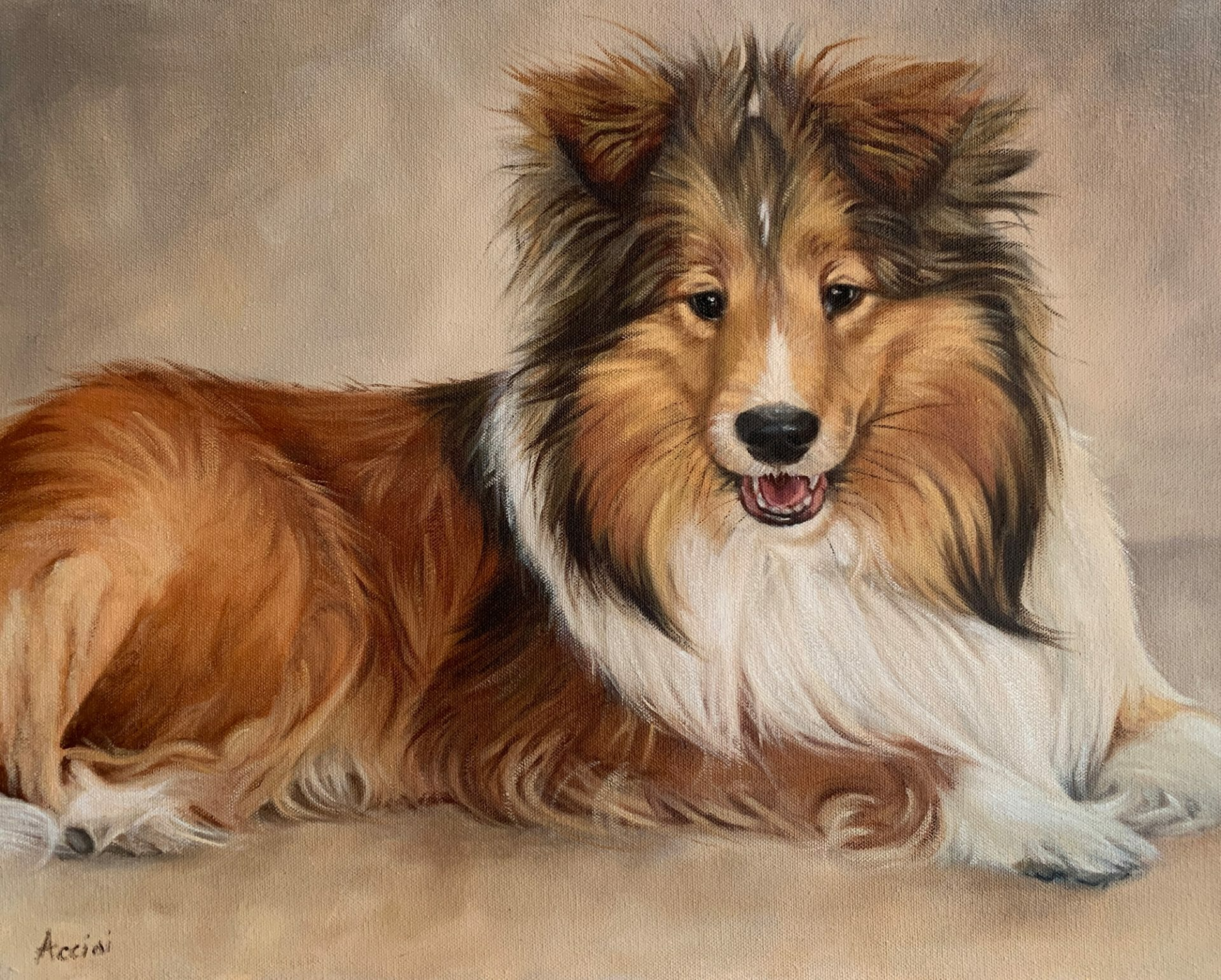 Darcy-Sheltie-oil-Acciai