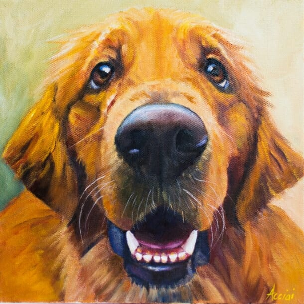 Miles the golden retriever -oil painting by Lisa Acciai of LAc Studio