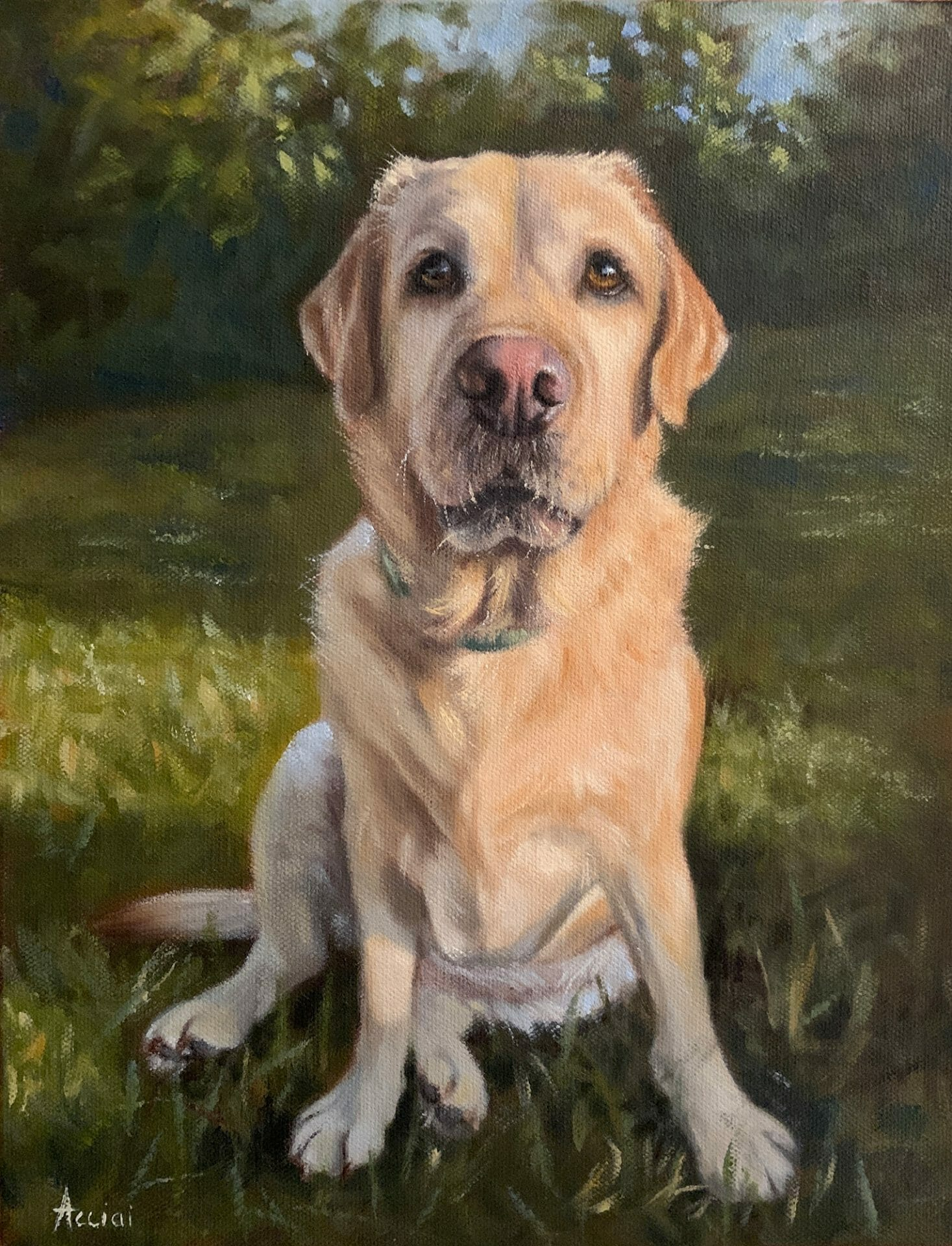 Turk, yellow lab - oil painting by Acciai-web