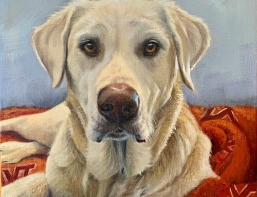 Cahill, yellow lab