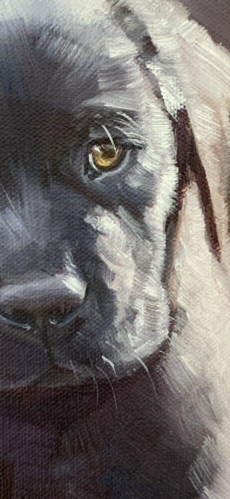 puppy detail