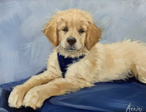 Ryder -Golden Retriever puppy